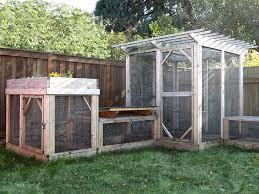 Backyard Chicken Blog