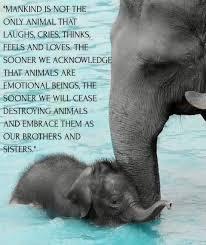 Animal Quotes Askideascom