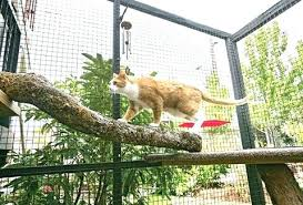 cat overhead playground