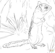 Small Picture Eastern Chipmunk coloring page Free Printable Coloring Pages