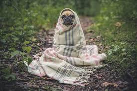 blanket meaning in telugu blanket
