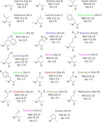 De Novo Enzyme Design Using Rosetta3 Pdf Strategies For Computational Protein Design With
