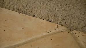 termite damage carpets