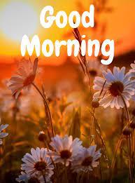 good morning nature images hd es