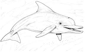 Small Picture Dolphin Coloring Pages nywestierescuecom