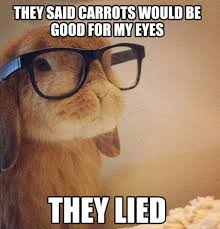 25 Best Funny animal Quotes and Funny Memes