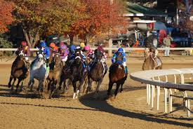 Breeders Cup Charts 2010 Taking A Look At Emerging Blue Hen Mare Mining My Own