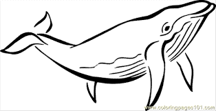 Small Picture whale color page killer whale coloring page tryonshorts Whale