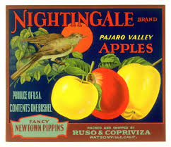 a vision of thoreau his essay civil disobedience new nightingale brand pajaro valley apples ruso copriviza watsonville california