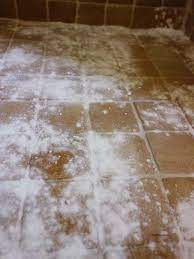 remove black mold from tile and grout