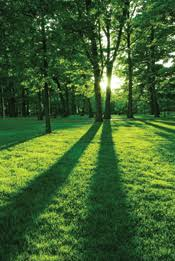 the importance of trees learn value and benefit of trees savatree importance and value of trees