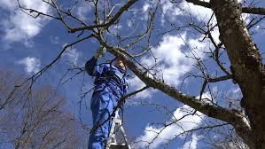 How To Prune Fruit Trees Properly  YouTubePruning Fruit Trees Video