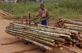 How Selective Logging Could Help Protect Indonesias Forests Cifor
