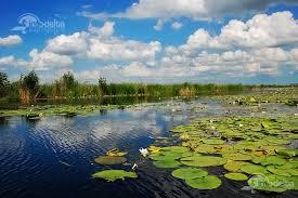 Imagini pentru vara in delta