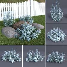 Artemisia Landscape Design Silver Wormwood Artemisia Ludovicana