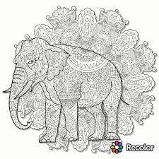 Recolor Coloring Pages Elephant Page App Sketch Pinterest 15361536