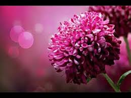 Birth Flower Chart Check Out Your Birth Flower Chart
