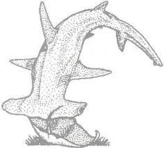 hammerhead shark eating a stingray. Brilliant Hammerhead Can Sharks Eat Rays Or Any Other Venomous Fishsnakes Intended Hammerhead Shark Eating A Stingray