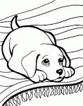 Раскраски с кошечками и собачками