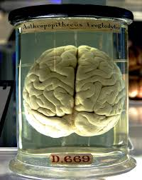 Until recently, scientists thought that this was only possible in. Brain Wikipedia