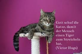 Lustige Katzenbilder Sprüche Teil 2 Alles Catde