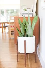 modern office plants. Marvelous Modern Office Plants Best 25+ Ideas On Pinterest |  Indoor, Modern Office Plants O
