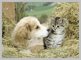 """Résultat de recherche d'images pour """"gif merci avec chats et chiens"""""""