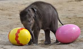 Image result for egg and elephant