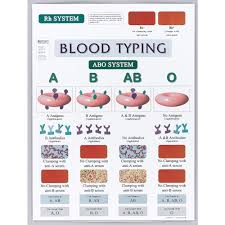 Blood Typing Chart