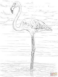 Flamingo Kleurplaat Flamingo Kleurplaten Animaatjes Nl