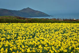 an essay about the poem of the daffodils  an essay about the poem of the daffodils