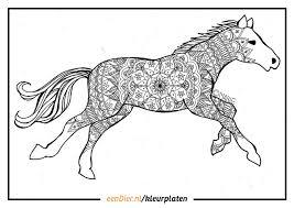 Kleurplaten Nl Dieren Paarden Information And Ideas Herz Intakt