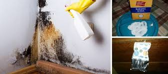 6 easy ways to remove mold naturally