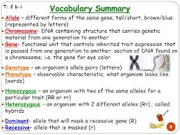 1 genetics allele diffe forms of the same gene 3 vocab review genotype the genetic organism represented by letters genotype phenotype genetic makeup