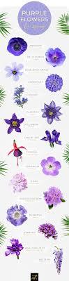 Light Blue Flower Names 50 Types Of Purple Flowers Ftd Com