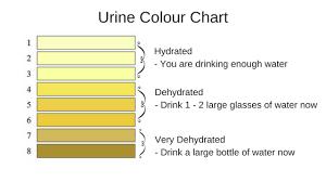 Urine Hydration Chart Australia Urine Colour Chart 1 The Biting Truth