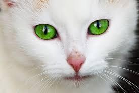 Bildresultat för gröna ögon