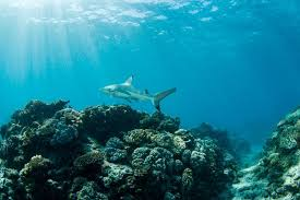 Australias Other Great And Threatened Coral Reefs The