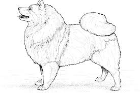 Puppy Dog Coloring Pages Dapmalaysiainfo