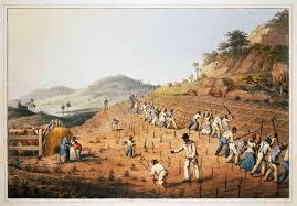 essays slaves on a sugar plantation