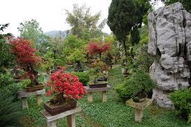 bonsai gardens. Bonsai Gardens D