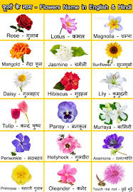 flowers names in english