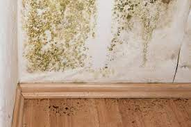 mold reation cost eliminating