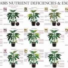 Cannabis Problem Chart Media Added By Animasola 420 Magazine
