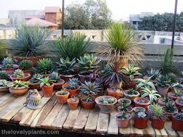 Small Picture Succulents Garden Design Markcastroco