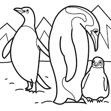 Gentoo Penguin Coloring Page Free Printable Coloring Pages 13822