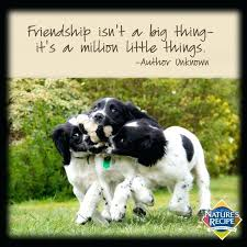 Quotes About Dogs And Friendship Magnificent Love Quotes For Pets And Quotes About Pets And Friendship 48 Best