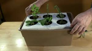 hydroponics device at domestic