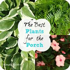 if you want a beautiful porch that will add tons of curb appeal to your home all you have to do is add plants most people however make 3 crucial mistakes