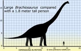 brachiosaurus size paluxysaurus paleoaerie